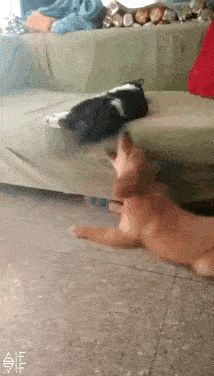 dog cat and tail