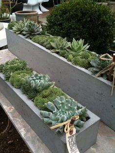 Concrete planter with succulents + Hart Concrete Design