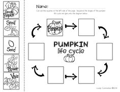 pumpkin life cycle printable from @lovelycommotion