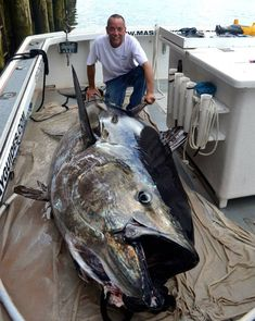 Is this the biggest blue fin you've ever seen? #deepseafishing