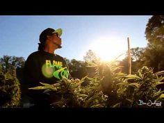 """JESSIE SPENCER: Frozilla featuring Yukmouth and Harry O - """"In My Lfe"""" (Official Music Video)"""
