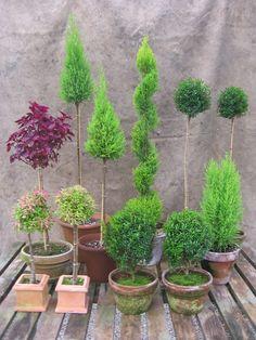 Topiary Garden, Boxwood Topiary, Topiary Trees, Garden Planters, Garden Crafts, Garden Art, Garden Design, Formal Gardens, Outdoor Gardens