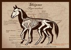 Sleipnir Skeleton by Xenothere.deviantart.com on @deviantART