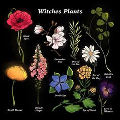Witches plants and their old world names 🌿✨ Magic Herbs, Herbal Magic, Maleficarum, Witchcraft For Beginners, Baby Witch, Plant Illustration, Botanical Illustration, Witch Aesthetic, Book Of Shadows
