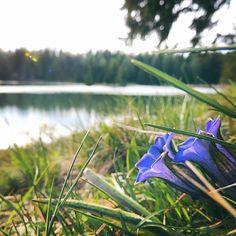 Lasciarsi sorprendere!#trekking #montagna #falchettonature  #falchettolovers  #natura #fiori #spring #lake #vacanzainmontagna @visittrentino @trentinodavivere
