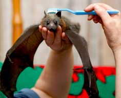 how to brush your bat