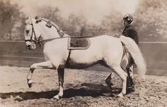 Horse Dance, Horse Art, All The Pretty Horses, Beautiful Horses, Lippizaner, Lipizzan, Spanish Riding School, Vintage Horse, Horse Sculpture