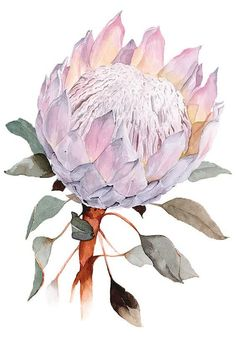 Protea Art, Protea Flower, Watercolor Print, Watercolor Flowers, Drawing Flowers, Flower Drawings, Watercolor Paper, Botanical Drawings, Botanical Art