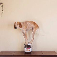 Maddie the Coonhound - Theron Humphrey