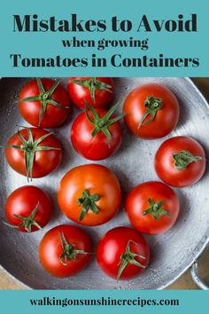 Here are 5 Mistakes to Avoid when Growing Tomatoes in Containers so you can have a successful harvest of delicious tomatoes this summer from Walking on Sunshine Recipes. Growing Tomatoes From Seed, Growing Tomatoes In Containers, Small Tomatoes, Growing Herbs, Veg Garden, Tomato Garden, Garden Tomatoes, Vegetable Gardening, Container Plants