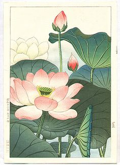 Tattoo Lotus Oriental Water Lilies Ideas For 2019 Lotus Kunst, Art Lotus, Japanese Painting, Chinese Painting, Chinese Art, Japan Illustration, Art Floral, Impressions Botaniques, Lotus Painting