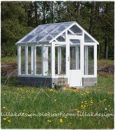 Växthus av gamla fönster, plasttak!