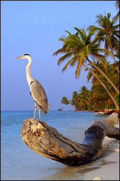 Simple Beauty, Blue Heron