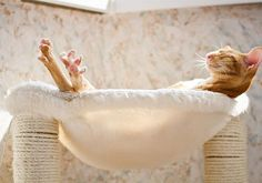 Just a way cute cat picture! Cats, kittens, relax, taking it easy Animals And Pets, Funny Animals, Cute Animals, Crazy Cat Lady, Crazy Cats, Gatos Cool, Orange Cats, Tier Fotos, Ginger Cats