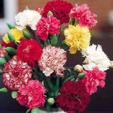 szép estét jó éjszakát - Google-keresés Floral Wreath, Wreaths, Plants, Jewelry, Google, Decor, Flowers, Floral Crown, Jewlery