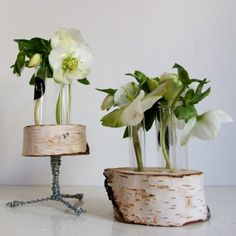 YaU Concept 2015 _ yau flori_helleborus in suporti yau din mesteacan_YaU wood structures for flowers
