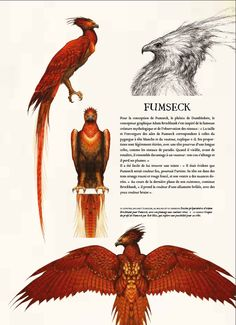 Fawkes is a phoenix, he is reborn from his ashes. Fawkes is a phoenix, he is reborn from his ashes. Phoenix Harry Potter, Art Harry Potter, Harry Potter Drawings, Harry Potter Universal, Harry Potter Beasts, Mythical Creatures Art, Mythological Creatures, M Anime, Fantastic Beasts