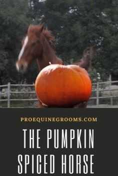 The pumpkin spiced horse! What to do about the horse under the influence of the pumpkin spice!