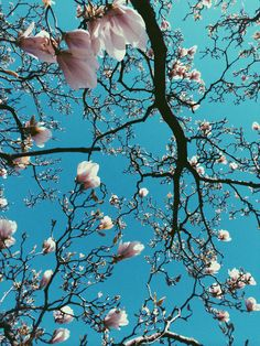 The beauty of Magnolias against a perfect sky. Love Flowers, Pretty Pictures, Beautiful World, Bunt, Flower Power, Planting Flowers, Cool Art, Nature Photography, Wallpaper