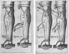 WIlliam Harvey/circulation of the blood. William Harvey, Science Books, Physiology, Blood, History, Odd Stuff, Bones, Maps, Antique