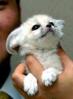 Tiny handful of cute!