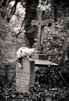 cat in graveyard