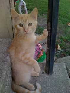 looks like my kitty<3