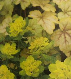 Spring Green, Tulips, Garden, Painting, Color, Art, Art Background, Garten, Kunst