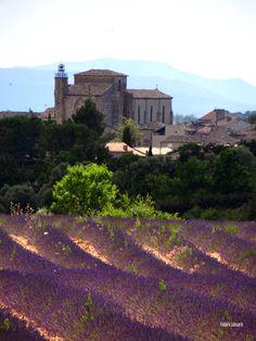 Valensole (Alpes de Haute Provence) #Provence #tourismpaca #tourismepaca #purple #violet #Valensole #field #champs #lavender #lavande