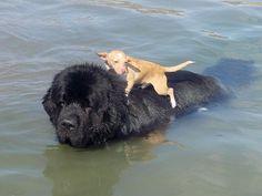 big pup, little pup.