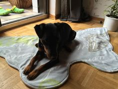 Dogs, Animals, Furniture, Home Decor, Pool Chairs, Bed, Animales, Homemade Home Decor, Animaux