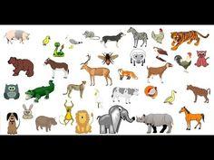 Jugamos a Adivinar los Sonidos de los Animales, la Casa y la Ciudad_Discriminación auditiva - YouTube Funny Animal Memes, Funny Animal Videos, Animal Quotes, Funny Animals, Design Comics, Cartoon Design, Animals And Pets, Baby Animals, Cute Lion