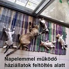 Animal Pictures, Funny Pictures, Funny Animals, Cute Animals, Corpse Pose, Warm Fuzzies, Family Outing, Dna Test, Funny Cute
