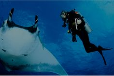 Explore La Mer's Blue Heart and meet Dr. Andrea Marshall