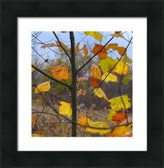 Autumn Leaves Framed Print by Brian Mollenkopf Art Prints For Sale, Fine Art Prints, Framed Prints, Hanging Wire, Delaware, Autumn Leaves, Fine Art America, Art Work, Ohio