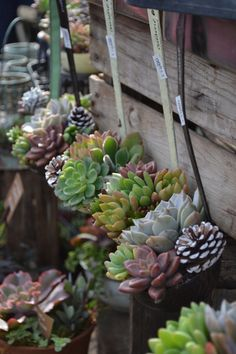 Succulents in old ladles.