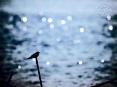 """Alle volte, sono proprio le piccole cose che ti permettono di andare avanti e di scoprire che, in fondo, la felicità potrebbe essere quella ♥‿♥  """"E ho avuto questa sensazione incredibile: che anche tu, proprio in quel preciso momento, stessi pensando a me. Dirai che ho troppa fantasia; [...]""""  #jojomoyes, #felicità, #piccolecose, #letteradamore, #italiano,"""