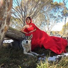 Red riding hood theme with husky photoshoot