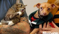 Lil Bub and Tuna the Chiweenie meet for the first time