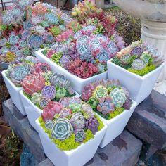* 多肉フェスティバル❗ 初日寒い中たっくさんのお客さまにお越しいただきありがとうございました❤ 今日もワイワイ楽しかった~ たにくるくんの寄せ植え教室も 可愛いのができました 明日もおまちしてまーす #liersucculent #lier #liergarden #succulent #succulents#succulentlove #succulover #多肉植物#多肉寄せ植え#多肉フェスティバル