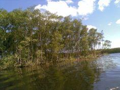 Amazônia paulista-Itanhaém..desde 1532.