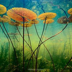 Wildlife photographer Frans Lanting has spent decades photographing the animals, people and landscapes of Africa. These 16 photos capture the life and colour o Underwater Plants, Ocean Underwater, Underwater Photos, Underwater Photography, Landscape Photography, Nature Photography, Vision Photography, Street Photography, Photography Ideas