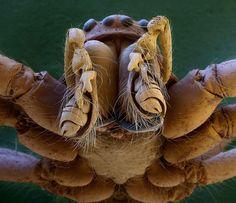 bocca di ragno al microscopio