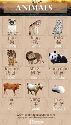 animals in Chinese learning