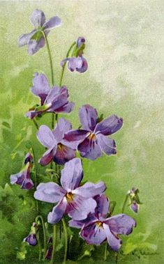 CarolArt ✽ Paintings and Video : Catharina Klein ~ art Catherine Klein, Watercolor Sketch, Watercolor Paintings, Aqua Coral, Lilac Roses, Rose Flowers, Shades Of Violet, Container Flowers, Abstract Styles