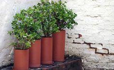 Dicas básicas para cuidar bem das suas plantas