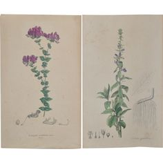 Pair of 19th Century Hand Colored Botanical Lithographs  @rubylanecom #BotanicalLithograph #rubylane