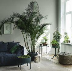 Natur Ins Haus Holen Wohnzimmer Palmen Gru%cc%88npflanzen To%