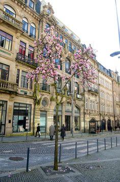 Flowers in Porto city |  #porto #portugal #portoholidays