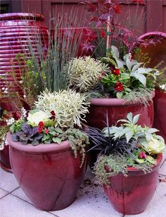 Winter container gardens - deep red, black, white and greens.